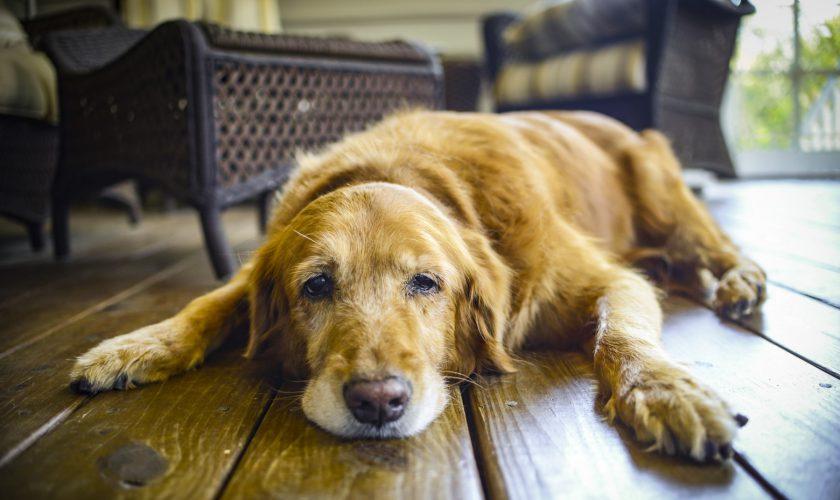 beitragsbild-fauler-hund-traegheit-langsam-keep-cool